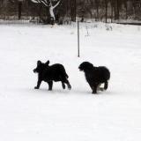 kutya-menhely-hajdú-bihar-hajdúszoboszló-kutyaorokbefogadas-2019.januar-26