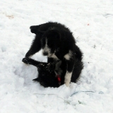 kutya-menhely-hajdú-bihar-hajdúszoboszló-kutyaorokbefogadas-2019.januar-30