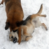 kutya-menhely-hajdú-bihar-hajdúszoboszló-kutyaorokbefogadas-2019.januar-31