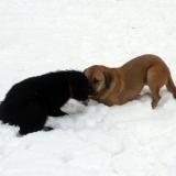 kutya-menhely-hajdú-bihar-hajdúszoboszló-kutyaorokbefogadas-2019.januar-4