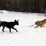 kutya-menhely-hajdú-bihar-hajdúszoboszló-kutyaorokbefogadas-2019.januar-9