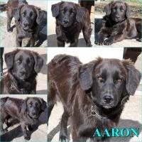 kutya-orokbefogadas-hajduszoszlo-aaron_1