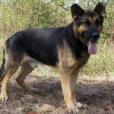 menhely-kutya-örökbefogadható-hajdúszoboszló-otis (4)