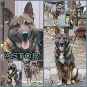astor-dog-adoption