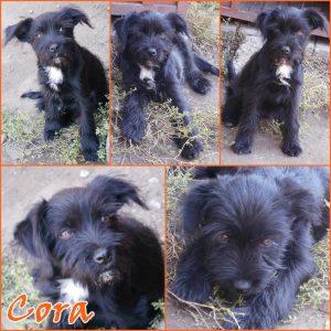 cora-kutya-orokbefogadas_1
