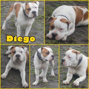 diego-dog-adoption