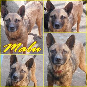 malu-dog-adoption3