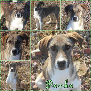 panka-kutya-orokbefogadas1