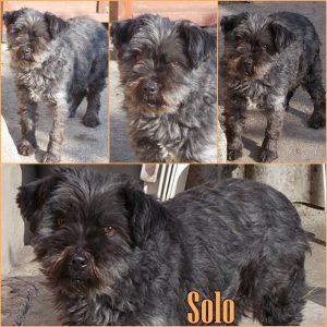 solo-dog-adoption