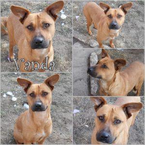 vanda-dog-adoption