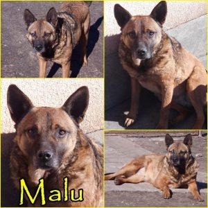 Örökbefogadható kutyák - Malu