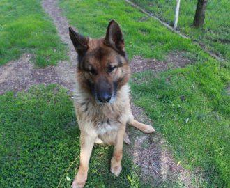 Kutya örökbefogadás - Hajdúszoboszlói Kutyabarátok Egyesület - Démon