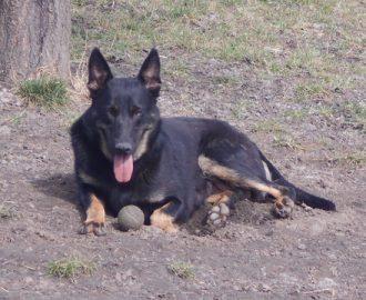 Kutya örökbefogadás - Hajdúszoboszlói Kutyabarátok Egyesület – Sandy