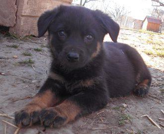Örökbefogadható kutyák - Sonny - Hajdúszoboszlói Kutyabarátok Egyesület