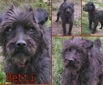 Örökbefogadható kutyák - Hajdúszoboszló -Betti