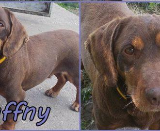 Örökbefogadható kutyák - Hajdúszoboszló - Daffny