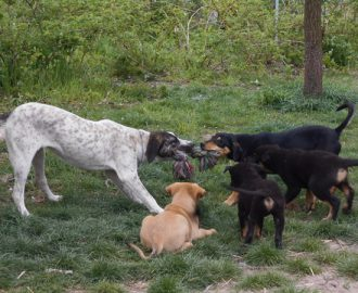 orokbefogadhato-kutyak-hajduszoboszlo