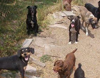 kutya-örökbefogadás-hajdúszoboszló