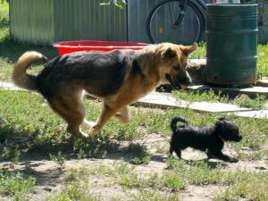 kutya-orokbefogadas-hajduszoszlo-10
