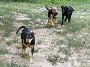 kutya-orokbefogadas-hajduszoszlo-100