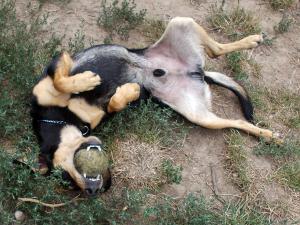 kutya-orokbefogadas-hajduszoszlo-102