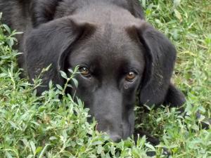 kutya-orokbefogadas-hajduszoszlo-104