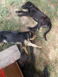 kutya-orokbefogadas-hajduszoszlo-113
