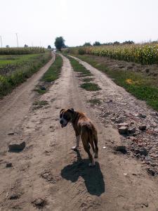 kutya-orokbefogadas-hajduszoszlo-119