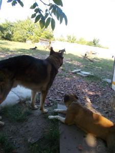 kutya-orokbefogadas-hajduszoszlo-123