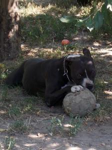 kutya-orokbefogadas-hajduszoboszlo-2017-julius-101