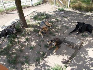 kutya-orokbefogadas-hajduszoboszlo-2017-julius-108