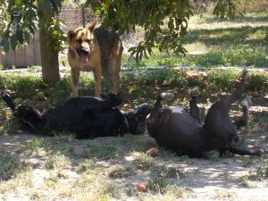 kutya-orokbefogadas-hajduszoboszlo-2017-julius-111