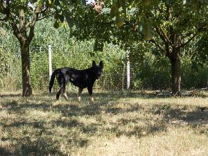 kutya-orokbefogadas-hajduszoboszlo-2017-julius-115