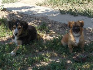 kutya-orokbefogadas-hajduszoboszlo-2017-julius-117