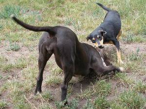 kutya-orokbefogadas-hajduszoboszlo-2017-julius-12