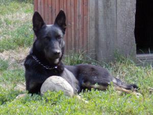 kutya-orokbefogadas-hajduszoboszlo-2017-julius-122