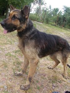 kutya-orokbefogadas-hajduszoboszlo-2017-2