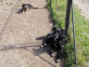 kutya-orokbefogadas-hajduszoboszlo-1