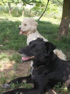 kutya-orokbefogadas-hajduszoboszlo-12