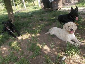 kutya-orokbefogadas-hajduszoboszlo-14