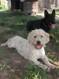 kutya-orokbefogadas-hajduszoboszlo-15