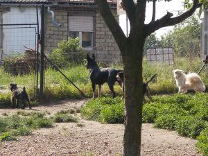 kutya-orokbefogadas-hajduszoboszlo-16