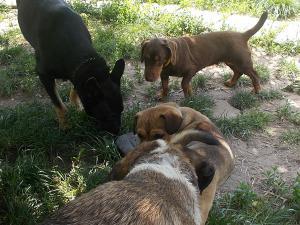 kutya-orokbefogadas-hajduszoboszlo-26
