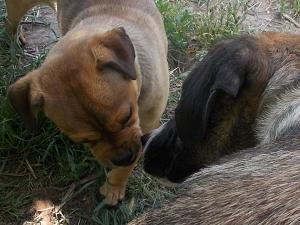 kutya-orokbefogadas-hajduszoboszlo-27