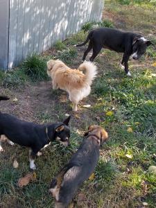 kutya-orokbefogadas-hajduszoboszlo-2017-oktober-101