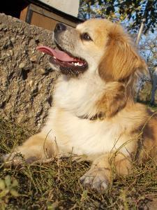 kutya-orokbefogadas-hajduszoboszlo-2017-oktober-107