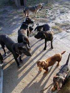 kutya-orokbefogadas-hajduszoboszlo-2017-oktober-108
