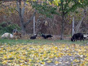 kutya-orokbefogadas-hajduszoboszlo-2017-oktober-114