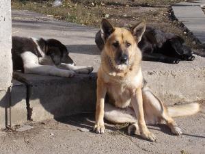 kutya-orokbefogadas-hajduszoboszlo-2017-oktober-119