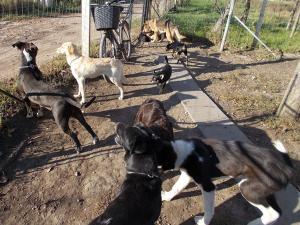 kutya-orokbefogadas-hajduszoboszlo-2017-oktober-123